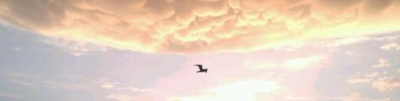 gaviota en cielo de fuego